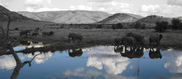 Head to the Pilansberg For a Wonderful Safari